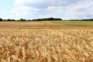 Пазарите на зърнени и маслодайни позабавиха възходящите движения