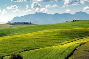 Леки отстъпления на зърнени и маслодайни, за да асимилират случващото се