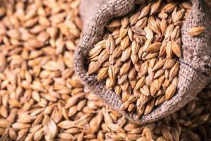 Очаква се аржентинските фермери да засадят значително повече ечемик тази година