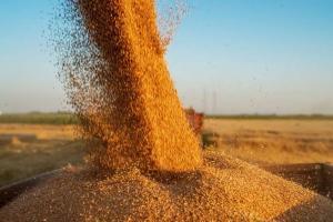 Китай ще произвежда повече пшеница и царевица през 2021, за сметка на соята