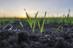 Пролетната сеитба в Русия е напреднала вече с повече от 50%