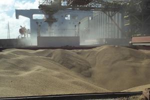 GASC закупи 240 Кмт хлебна пшеница от северната ни съседка