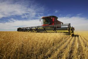 Според Refinitiv, производството на пшеница в Русия ще достигне 78.6 Ммт