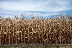 Предупреждения за извънредна суша от юни до септември в Бразилия
