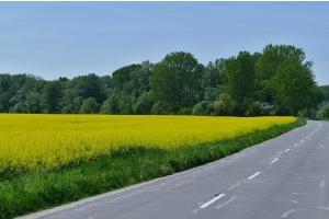 Експортното мито върху руската пшеница ще падне драстично