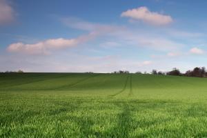 Износът на пшеница от Русия през юни може да се увеличи двойно