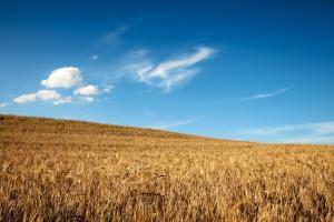 Австралия ще очаква втората най-добра реколта пшеница досега