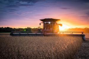 Засетите със зърнени култури площи във Франция са се увеличили