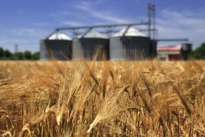 Цените маневрират в двете посоки на фона на днескашния USDA доклад