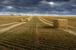 USDA очаква още по-голямо производство на пшеница през новия сезон