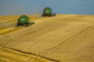 С наближаваща жътва, зърнените пазари търпят тежки седмични загуби