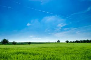 Сухо време в Северна Америка подкрепя пшеница и канола