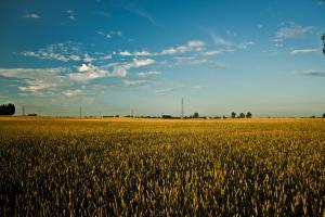 ЕК понижава оценката си за зърнопроизводството през новия сезон