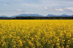 Площите с пшеница във Великобритания нарастват с 26%