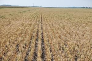 Казахстан преустановява зърнения си експорт за 6 месеца