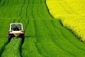 Докато пшеницата и царевицата държат позиции, маслодайният комплекс отслабва