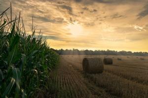 Аржентинските фермери ще предпочитат царевицата пред соята