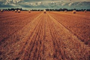 Пазарите на пшеницата задълбочават корекцията
