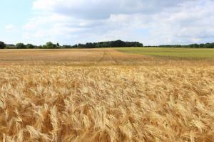 Европейската пшеница продължава да трупа напрежение около 242 €/т
