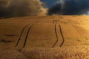 Благоприятно време и поскъпващи цени на зърнените пазари