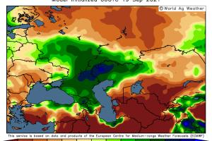Експортното мито на пшеницата от Русия поевтинява