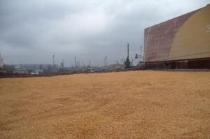Добри цени и реколта водят до силен експорт на царевица от България